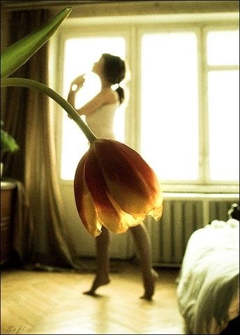 tulip-ballerina